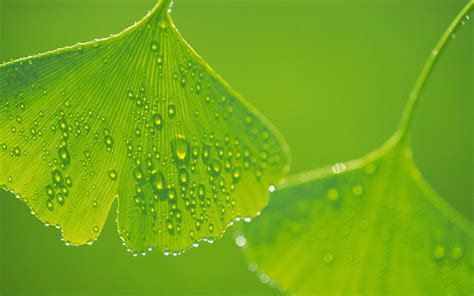 green leaf picture 5
