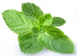 peppermint leaf picture 2