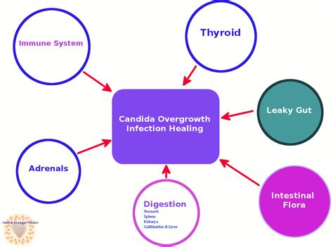 yeast candida overgrowth treatment picture 3