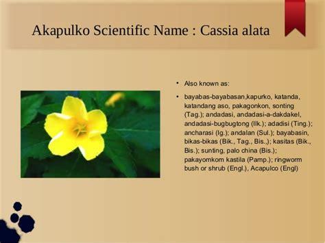 palochina herbal picture 11