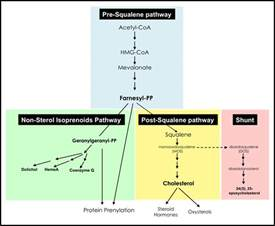does pravastatin cause muscle pain picture 3