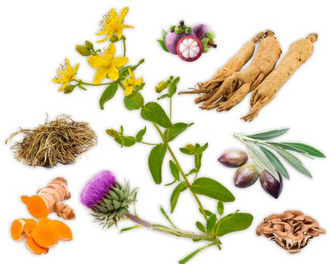 what natural herb natural herb that acts as picture 11