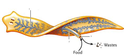 digestion stopped picture 1