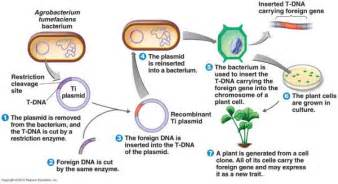 human growth hormone gmo picture 17