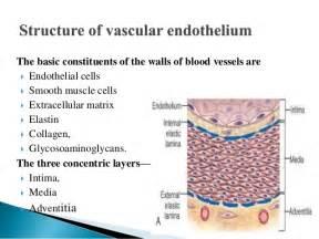 collagen elastin picture 7