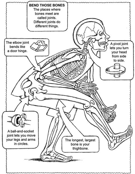 question on aging of the body picture 14