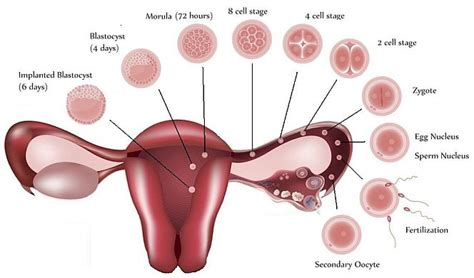 bright red spotting after menopause picture 2