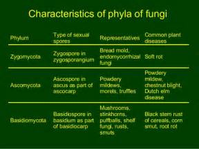 characteristics of fungi kingdom picture 14