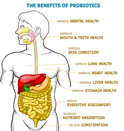 health benefits of probiotics picture 6