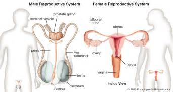 reproductive picture 1