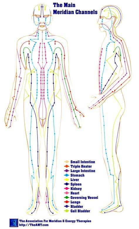 human liver diagram picture 6