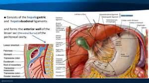 anatomy colon picture 5