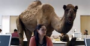 camel h pictures picture 17