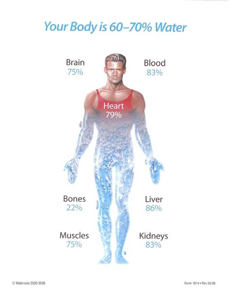 how much of body weight is muscle picture 11