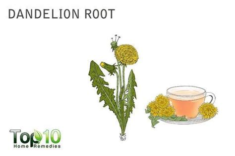 dandelion root boosts testosterone picture 6