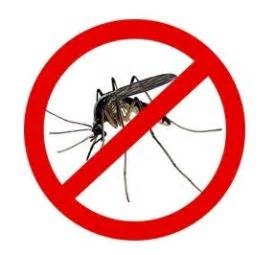 mosquitoes h picture 15