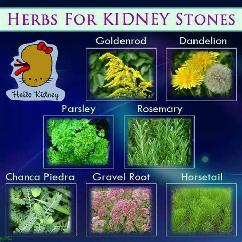 herbs that cause positive ua picture 3