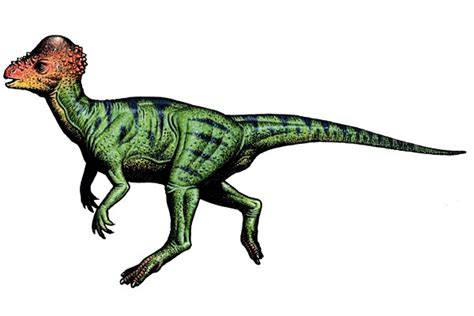 dinosaur h picture 6