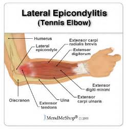 Herbal remedies for scar tissue buildup in elbow picture 2