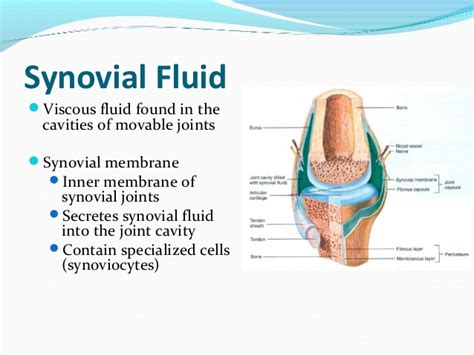 joint fluid picture 1
