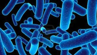 purchase tg1 bacterial strain picture 5