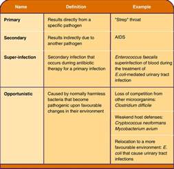 types of bacterial infections picture 3