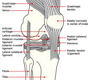 proprioceptive functions of soccer players' knee joints picture 9