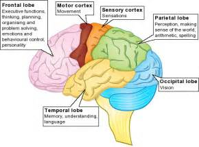 major components of the psychological aspect aging picture 11