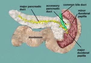 symptoms of liver enlargement picture 11