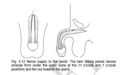 penis ki health k nushka picture 3
