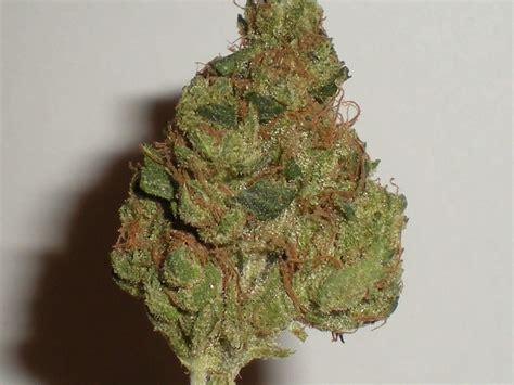 herbal marijuana picture 7