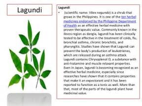 philippine herbal medicine to cure almoranas picture 4