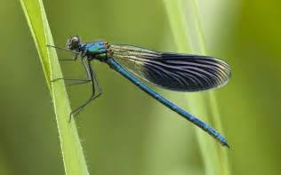 biddy dragonfly diet picture 13