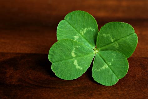 clover picture 6