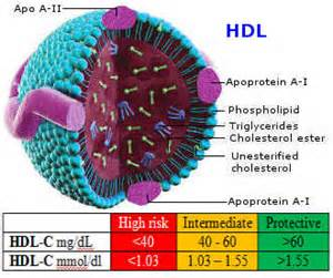 is all of the cholesterol in good cholesterol picture 3