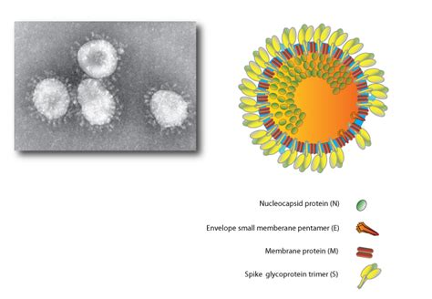 how us stomach virus 2014 ped picture 5