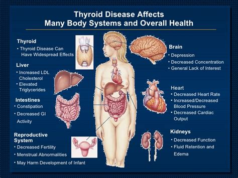can thyroid medication affect pregnancy picture 19