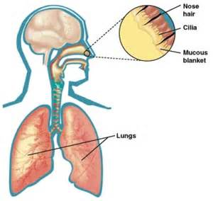 homeopathic lung protection picture 3