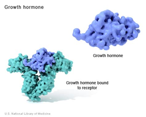 what is the differance between hgh & hcg picture 17