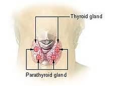 icd-9-cm code for diagnosis of thyroid gland primary picture 3