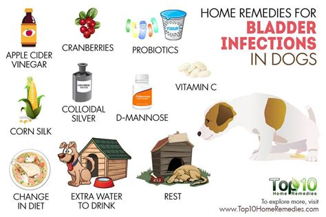 home remedies for bladder infection picture 7