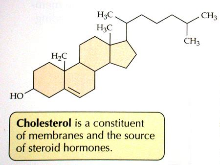 cholesterol picture 9
