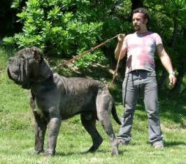 picture of mastiff big penis picture 13