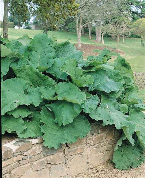 fresh burdock root for sale sydney picture 9