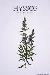 herbal diuretic picture 7
