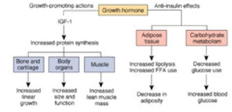 hormone defnitoin quizlet picture 6