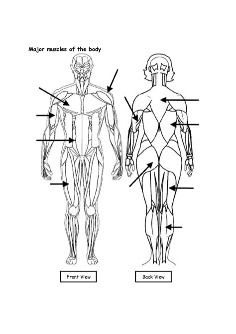 agonist and antagonist muscle picture 3