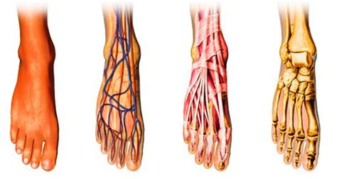 How running affects your blood flow picture 4