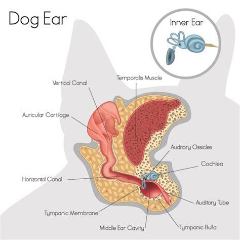dog skin allegies picture 5