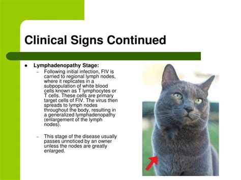clinical signs of feline herpesvirus fcv picture 16